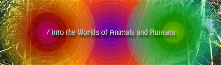 into the world of Animals and Humans